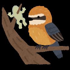bird_mozu