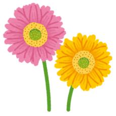 flower_gerbera